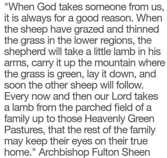 Sheen taking sheep home.jpg