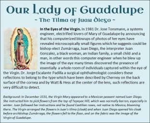 Guadalupe 7