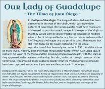 Guadalupe 8